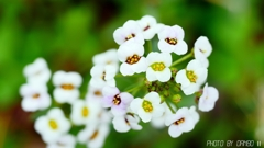 飛躍する花 <3>