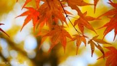 秋なんだなぁ~ <6>