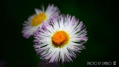 春の野草花 <9-6>