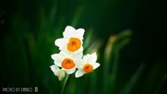 春の香りを届けます <2>