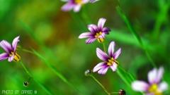 野に咲く花 <10>