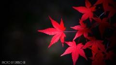 秋に染まる <25>