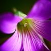 紫の君 <2>