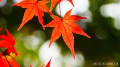 秋に染まる <26>