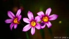 野に咲く花 <21>