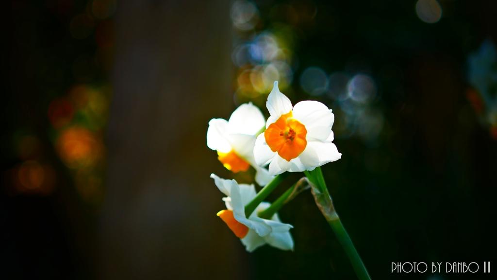 春の香りを届けます <17>