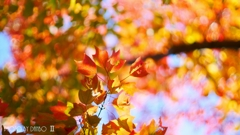 それぞれの秋 <6>
