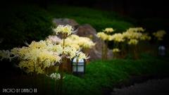 天上に咲く白花 <7>