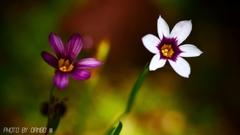 野に咲く花 <27>
