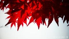 秋なんだなぁ~ <14>