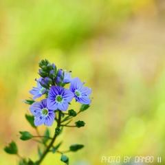 野に咲く花 <5>