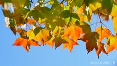 秋な感じ!<15>
