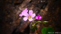 野に咲く花 <1>