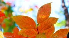秋に染まる <23>
