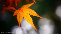 秋なんだなぁ~ <8>