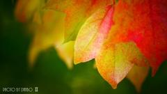 秋な感じ!<16>