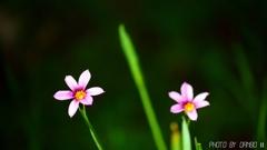 野に咲く花 <11>