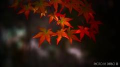 秋に染まる <27>