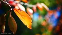 秋な感じ!<12>
