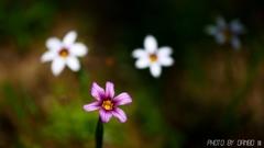野に咲く花 <20>