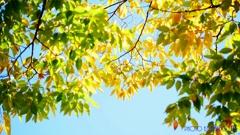 秋な感じ!<10>