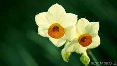 春の香りを届けます <6>
