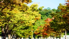 秋な感じ!<5>