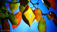 秋な感じ!<14>