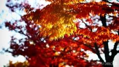 それぞれの秋 <3>