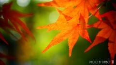 秋なんだなぁ~ <9>