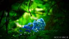 紫陽花と虫 <2>