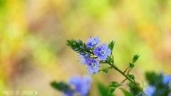 野に咲く花 <4>