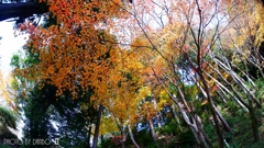 秋なんだなぁ~ <15>