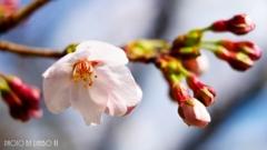勝手に開花宣言(^_-)-☆ <1>