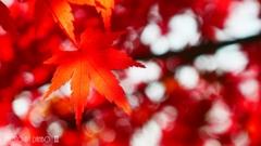秋なんだなぁ~ <18>