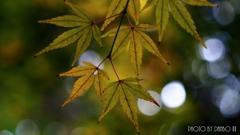 秋に染まる <29>
