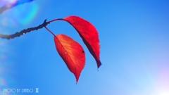秋な感じ!<7>