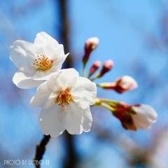 勝手に開花宣言(^_-)-☆ <2>
