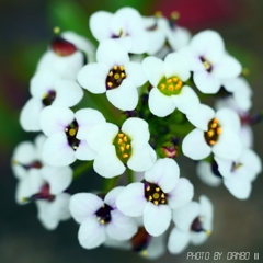 飛躍する花 <2>