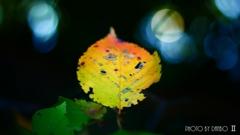 秋な感じ!<8>