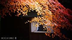 秋なんだなぁ~ <22>