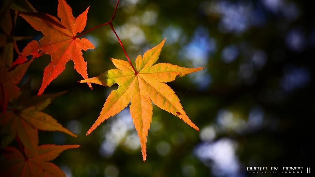 深まる秋 <1>