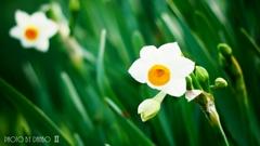 春の香りを届けます <1>
