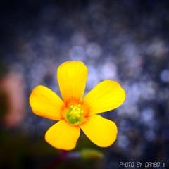 野に咲く花 <9>