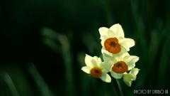 春の香りを届けます <5>