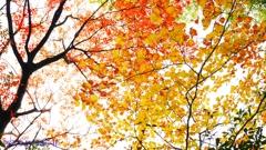 ポテチの木 <1>