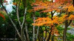 秋なんだなぁ~ <21>
