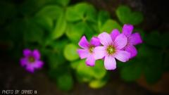 野に咲く花 <3>