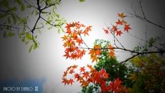 秋な感じ!<2>