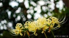 天上に咲く白花 <8>